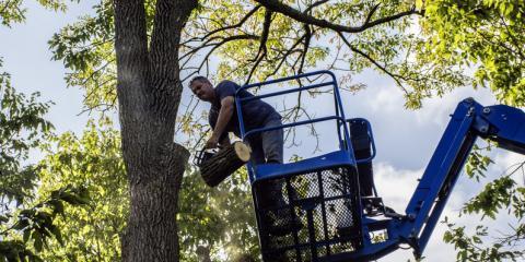 3 Important Autumn & Early Winter Tree Service Tasks, Carter, Arkansas