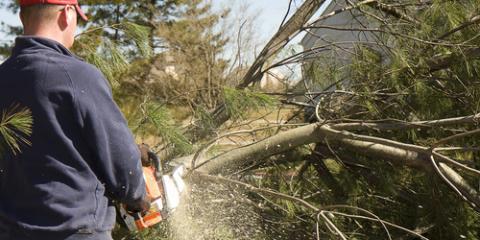 3 Advantages of Hiring a Tree Service, Hamilton, Ohio