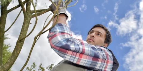 When to Have a Tree Service Prune Your Trees, Victor, New York