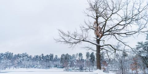 3 Tips to Help Your Trees Survive an Ice Storm, West Hartford, Connecticut
