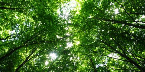 Crosseroads Tree Service, Tree & Stump Removal, Services, Holmen, Wisconsin