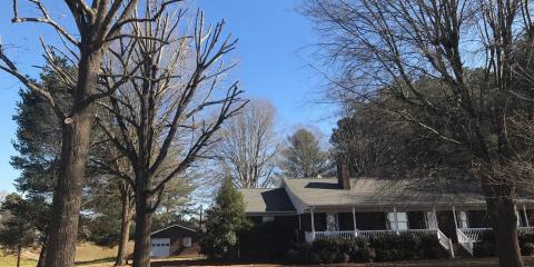 3 Common Tree Pests in North Carolina, New London, North Carolina