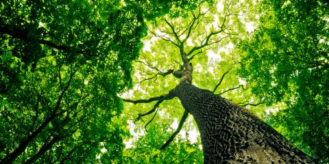 What Is the Difference Between Tree Trimming & Pruning?, Oak Ridge, North Carolina