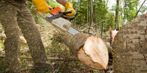 Ross Tree and Contracting Inc., Tree Service, Services, Sudbury, Massachusetts