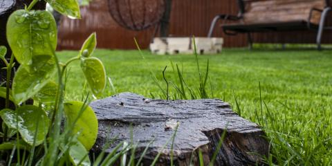 Is Stump Removal Right for Your Property?, York, South Carolina