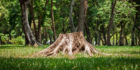 5 Benefits of Tree Stump Removal, St. Charles, Missouri