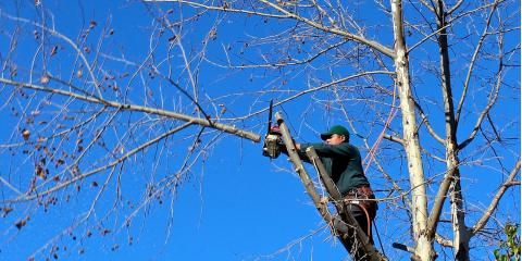 4 Times When You Need Tree Trimming Services, Austin, Texas