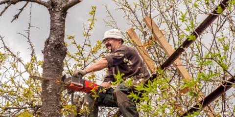 4 Reasons to Hire a Professional for Tree Trimming, York, South Carolina