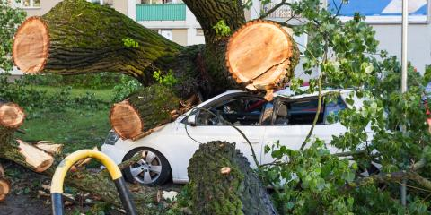 How Proper Tree Trimming Prevents Storm Damage, Jessup, Maryland