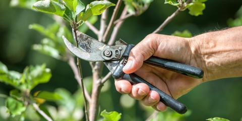 3 Reasons Tree Pruning Is Important, Milford, Ohio