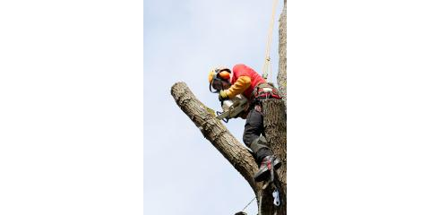 Understanding Tree Topping & Tree Cutting Services, West Hartford, Connecticut