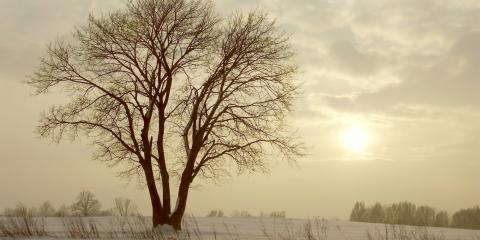 A Guide to Winter Oak Tree Care & Oak Wilt, Crescent, Wisconsin