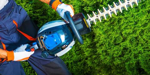 Your Top Tree Trimming FAQs Answered, Holland, Wisconsin