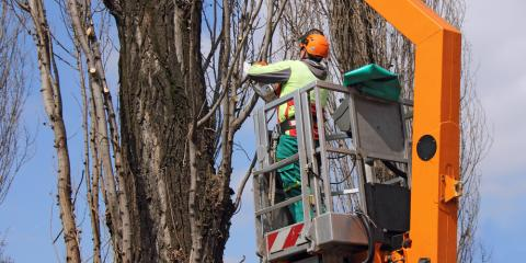 When Is the Best Time for Tree Pruning?, North Hobbs, New Mexico