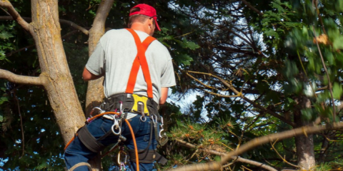 How Tree Pruning & Thinning Protects Your Trees, Property, & Family, Summerdale, Alabama