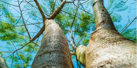 O'Fallon's Tree Removal Service Explains 5 Common Tree Diseases, O'Fallon, Missouri