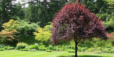 3 Tips for Picking the Right Trees & Shrubs for Your Garden, Grant, Nebraska