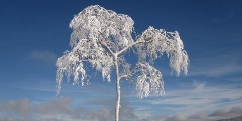 4 Easy Tips to Prepare Your Trees for Winter, ,