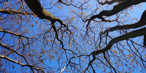 B & B Tree Services, Shrub and Tree Services, Services, Forest, Mississippi