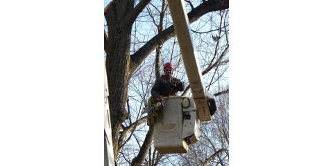 Top 3 Signs You Need Tree Removal Service, High Point, North Carolina