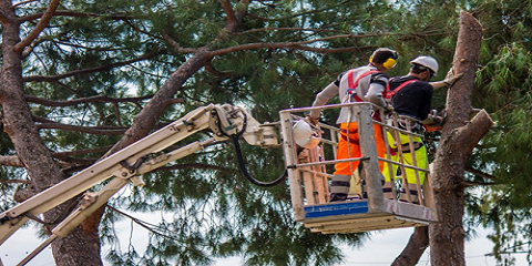 3 Tree Removal Dangers You'll Avoid by Hiring a Professional, Summerdale, Alabama