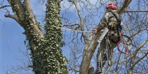 3 Reasons to Hire A Professional Tree Service, Hersey, Minnesota