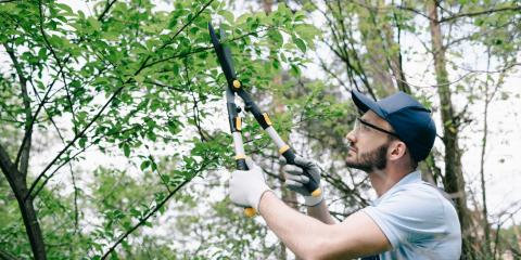 5 Benefits of Tree Trimming, Middlefield, Ohio