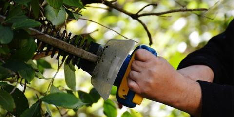 Loveland Tree Care Pros Offer 4 Yard Maintenance Tips, Loveland, Ohio