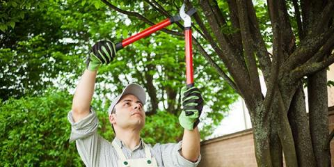St. Louis' Leading Arborist Offers 5 Reasons to Hire a Professional Tree Service, Snow Hill, Missouri