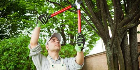 5 Reasons to Hire a Professional Arborist for Tree Services, Snow Hill, Missouri