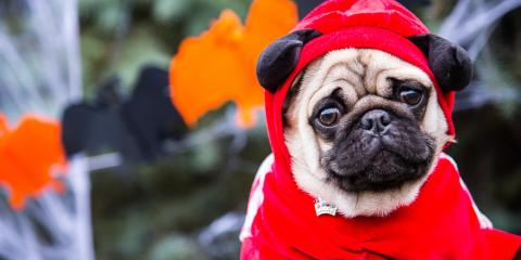 A Guide to Pet Safety on Halloween, Wentzville, Missouri