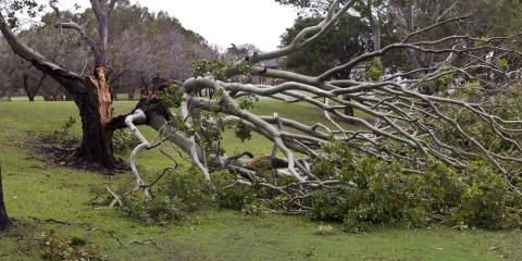 Guide to Backyard Tree Damage: What to Do After a Severe Storm, Snow Hill, Missouri