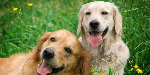 A Guide to 5 Essential Canine Pet Vaccinations, Troy, Missouri