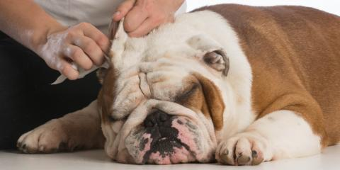 5 Tips From a Veterinarian on Properly Cleaning Dog Ears, Troy, Missouri