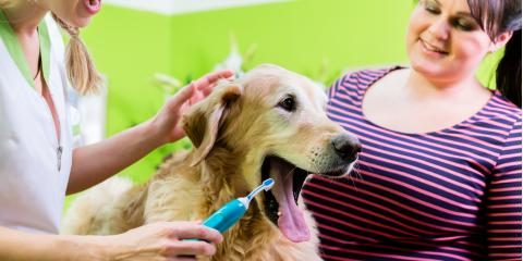 The Essential Guide to Pet Dental Care, Wentzville, Missouri