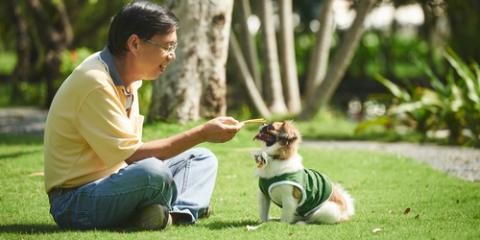 3 Benefits of Buying Your Pet's Medication From the Veterinarian, Wentzville, Missouri