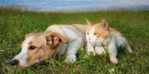 May Is National Pet Month! Treat Your Animals Right With Pet Wellness Exams & More, Troy, Missouri