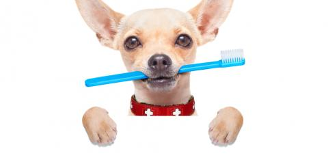 Pet Dental Care: 3 Reasons Teeth Cleanings Are Important, Wentzville, Missouri