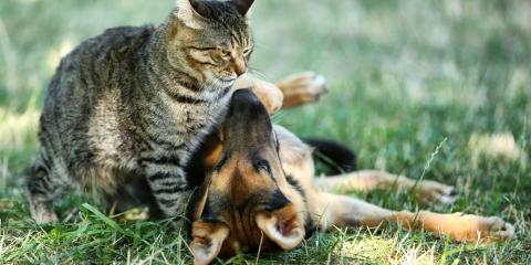 4 Basic Neutering FAQs Answered by Local Vets, Wentzville, Missouri