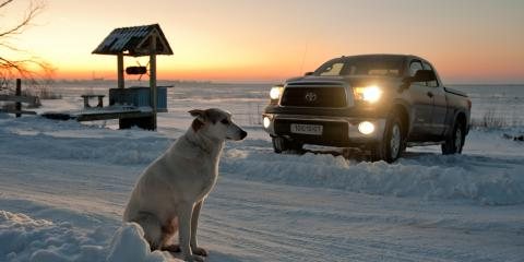 Top 4 Truck Accessories to Own if You Have a Dog, Troy, Ohio