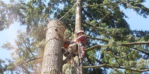 Don't Be Shady, Trim Your Trees With Oregon Arborists True Care, Northwest Clackamas, Oregon