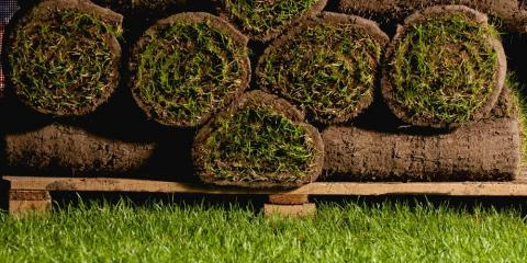 Grass Seed or Sod? Weighing the Pros & Cons of Each, Anderson, Ohio