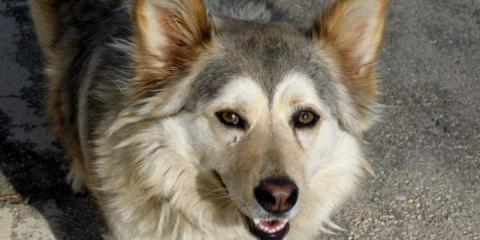 Soldotna Vets Explain 2 Common Dog Behavior Problems—& How to Fix Them, Kalifornsky, Alaska