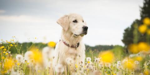 Animal Clinic Explains Pet Insurance, San Marcos, Texas