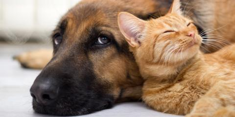 3 Ways to Protect Your Pets from Fleas and Ticks, Lincoln, Nebraska