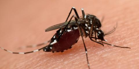 Mosquito Control Experts on 3 Reasons These Insects Are So Dangerous, Bullard, Texas