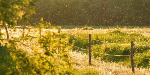 Delightful A Brief Guide To Backyard Mosquito Control, Bullard, Texas