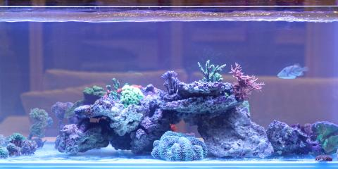Relocating? Here's How to Safely Move Your Aquarium, Walton, Kentucky