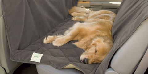 dog car seat cover, Manhattan, New York