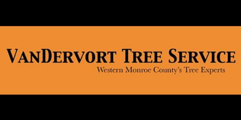 VanDervort Tree Service, Tree Service, Services, Brockport, New York